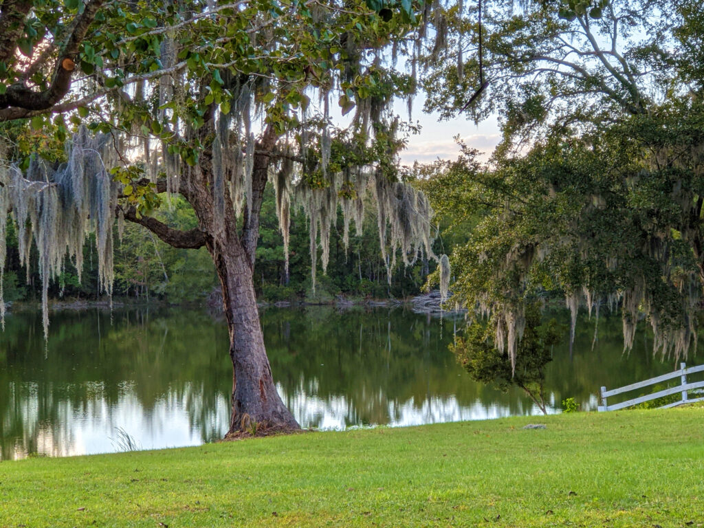 Spanish moss hanging from the trees lends a distinctly Southern look to the place.